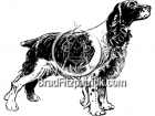 Black and White Springer Spaniel Clipart Dog